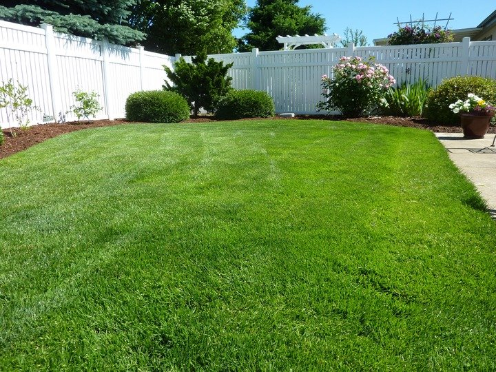 green grass and vinyl privacy fence